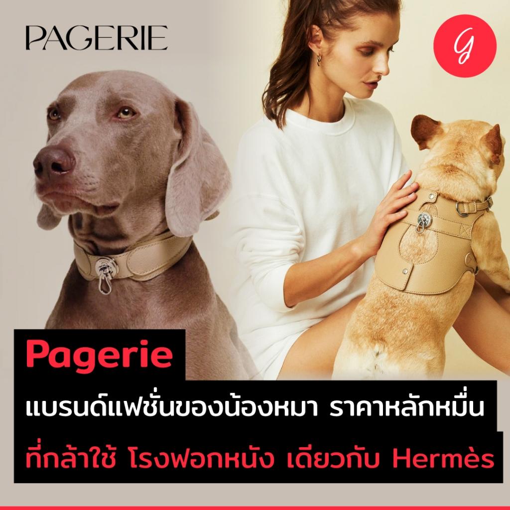 Pagerie แบรนด์แฟชั่นของน้องหมา ราคาหลักหมื่น ที่กล้าใช้โรงฟอกหนังเดียวกับ Hermès